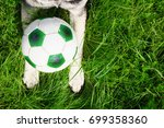 Paws Of A Dog With A Soccer...