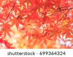 red maple leaves in autumn... | Shutterstock . vector #699364324