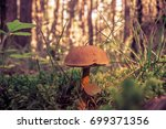 mushrooms in the forest | Shutterstock . vector #699371356