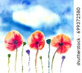 three red orange poppies with...   Shutterstock . vector #699372580