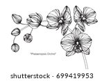 hand drawn and sketch orchids... | Shutterstock .eps vector #699419953