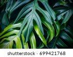 tropical green leaves on dark... | Shutterstock . vector #699421768