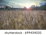 evening wheat field | Shutterstock . vector #699434020