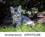 Stock photo kitten under the tree 699476188