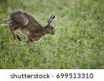 Stock photo rabbit running 699513310