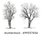 trees autumn hand drawing... | Shutterstock .eps vector #699557656