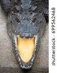 Close Up Crocodile Opening Its...