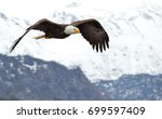 american bald eagle in flight...   Shutterstock . vector #699597409