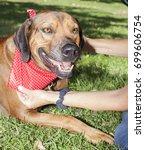 ridge back park portraits   Shutterstock . vector #699606754