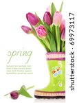 colorful fresh spring tulips... | Shutterstock . vector #69973117