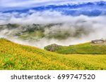 beautiful lily field with...   Shutterstock . vector #699747520
