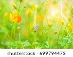 little butterfly island feeding ... | Shutterstock . vector #699794473