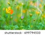 little butterfly island feeding ... | Shutterstock . vector #699794533