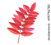 watercolor rowan brunch with... | Shutterstock . vector #699796780