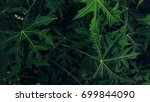 nature tropical green leaves... | Shutterstock . vector #699844090