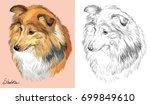 colorful portrait of sheltie ... | Shutterstock .eps vector #699849610