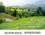 view of green rice fields... | Shutterstock . vector #699854380