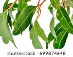 a studio photo of eucalyptus... | Shutterstock . vector #699874648
