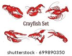Set Of Vector Crayfish...
