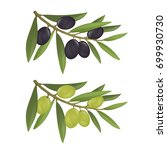 olive branches with green and... | Shutterstock .eps vector #699930730