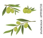 olive branches with green... | Shutterstock .eps vector #699930733