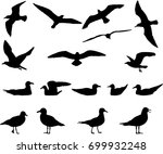 Silhouettes Of Gulls Flying An...