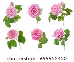 pink rose set isolated on white ...   Shutterstock . vector #699952450