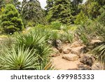 yuki is among the stones.   Shutterstock . vector #699985333