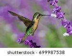 hummingbird trochilidae flying... | Shutterstock . vector #699987538