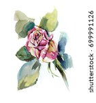 two color rose. wedding... | Shutterstock . vector #699991126