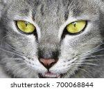 close up cat face | Shutterstock . vector #700068844