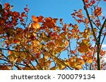 fall foliage against blue sky | Shutterstock . vector #700079134