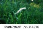 grass white flower | Shutterstock . vector #700111348