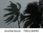 Coconut Palms Tree During Heav...