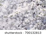 Spring Seasonal Background Wit...