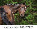 Stock photo portrait of funny bay horse looking back 700187728
