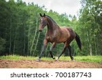 beautiful bay horse running on... | Shutterstock . vector #700187743