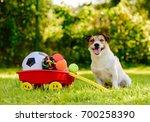 Happy Dog Sitting Near...