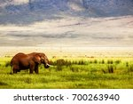 lonely african elephant in the... | Shutterstock . vector #700263940