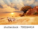 cheetahs in the african savanna ... | Shutterstock . vector #700264414