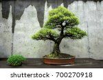 Bonsai Tree At The North...