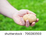 potato  hand on natural... | Shutterstock . vector #700283503