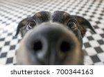playful dog face  black white... | Shutterstock . vector #700344163