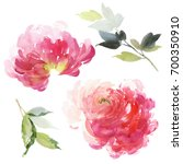 set of watercolor large peony... | Shutterstock . vector #700350910