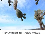 prickly pear cacti on santa fe...   Shutterstock . vector #700379638