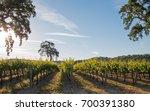 california valley oak tree in... | Shutterstock . vector #700391380