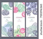blackberry  cranberry ... | Shutterstock .eps vector #700396360