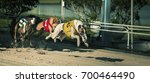 Small photo of dogs race