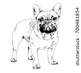 great guard dog drawn with ink... | Shutterstock . vector #700481854