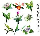 Tropical Plants. Watercolor...